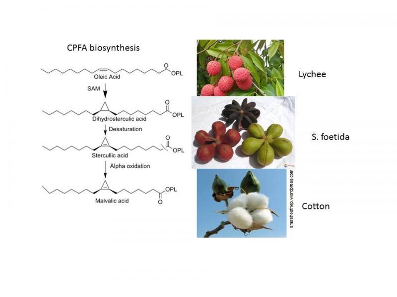 BSA 13-32: Renewable chemical feedstock