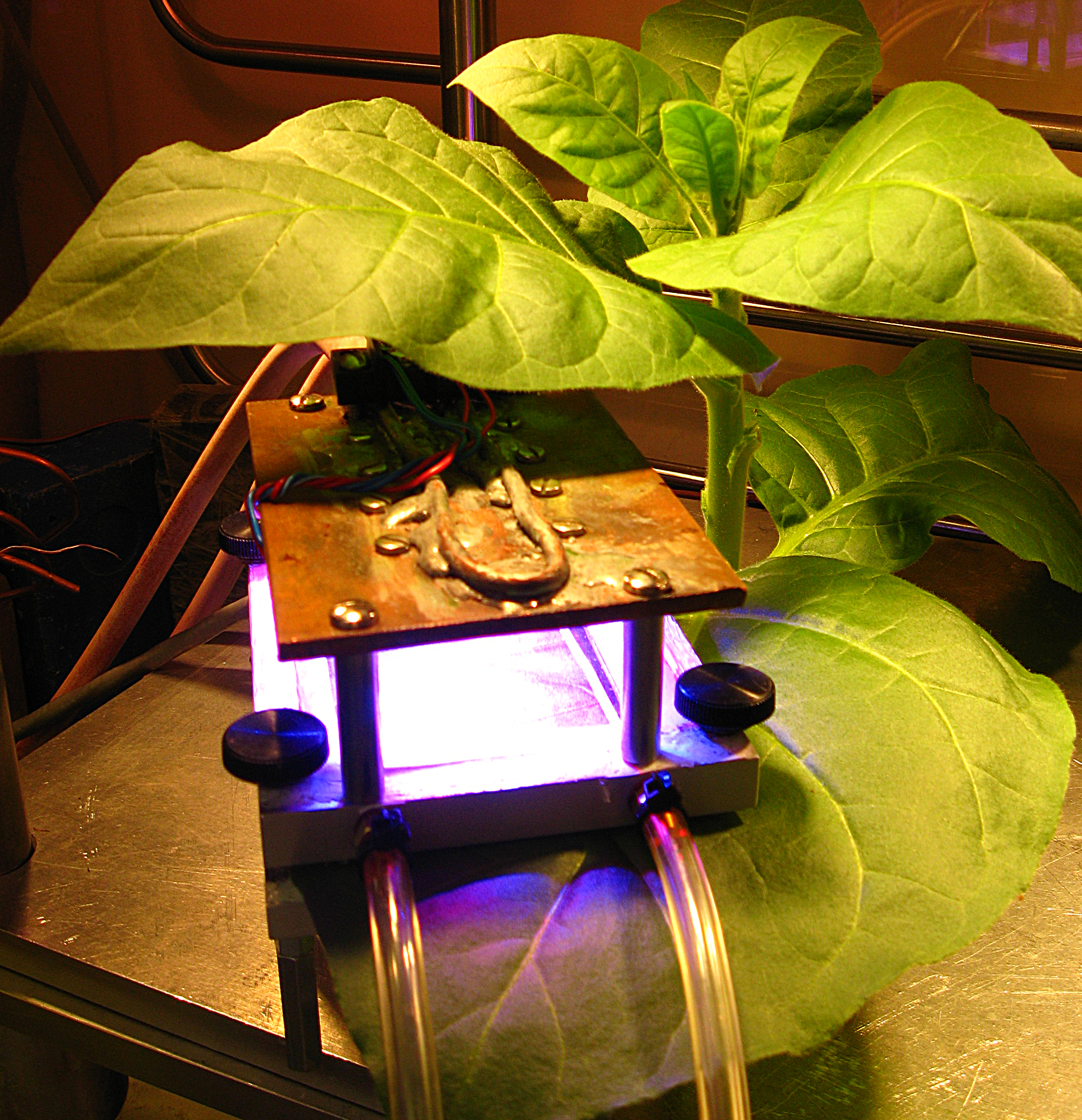 Study Offers Insight Into Plant Cell Wall Construction Bnl Newsroom Photo Of Apparatus