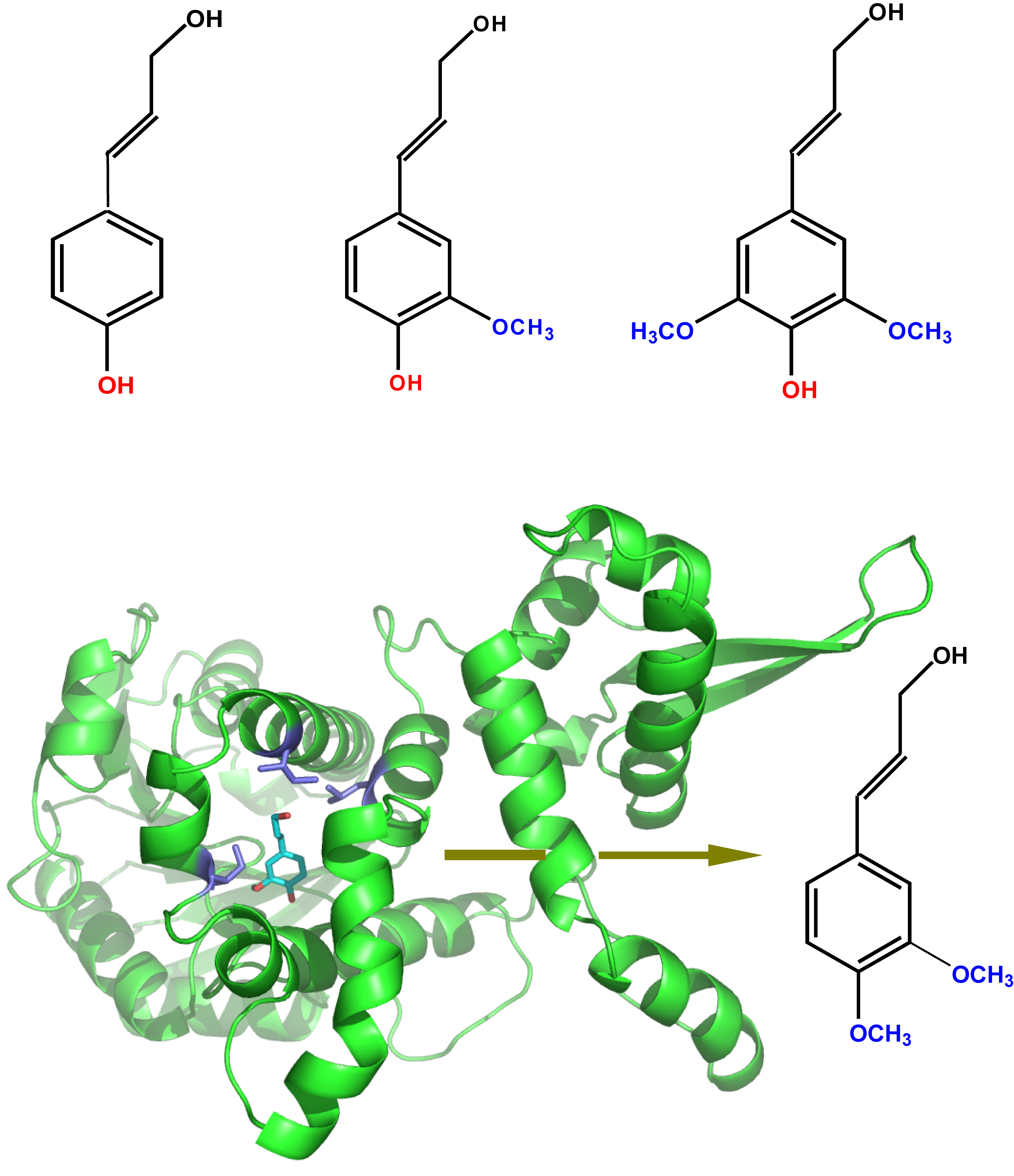 Making new enzymes to engineer plants for biofuel production bnl molecular structure diagram of lignin pooptronica Images