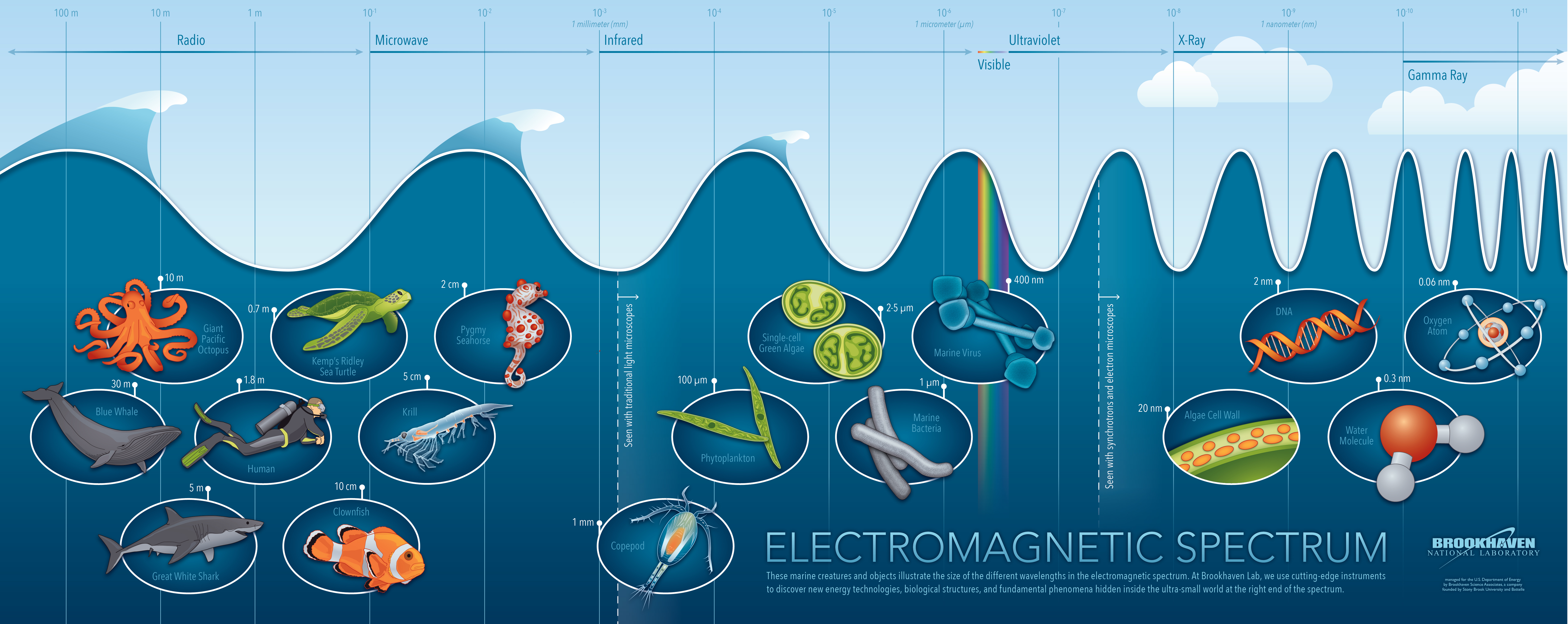 Into the Depths of the Electromagnetic Spectrum | BNL Newsroom