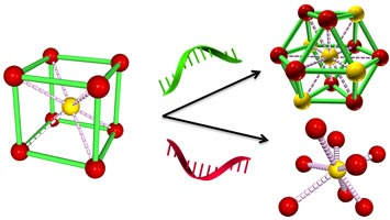 reprogramming DNA strands