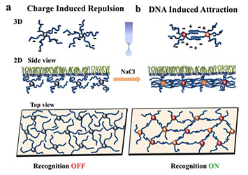 Tuning of 2D DNA-based nanoparticle