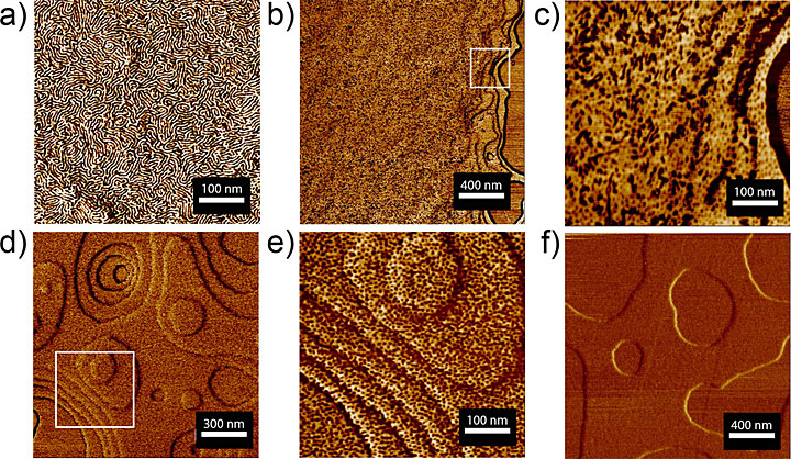 Atomic force microscope images of a sugar-polyolefin conjugate ultrathin film