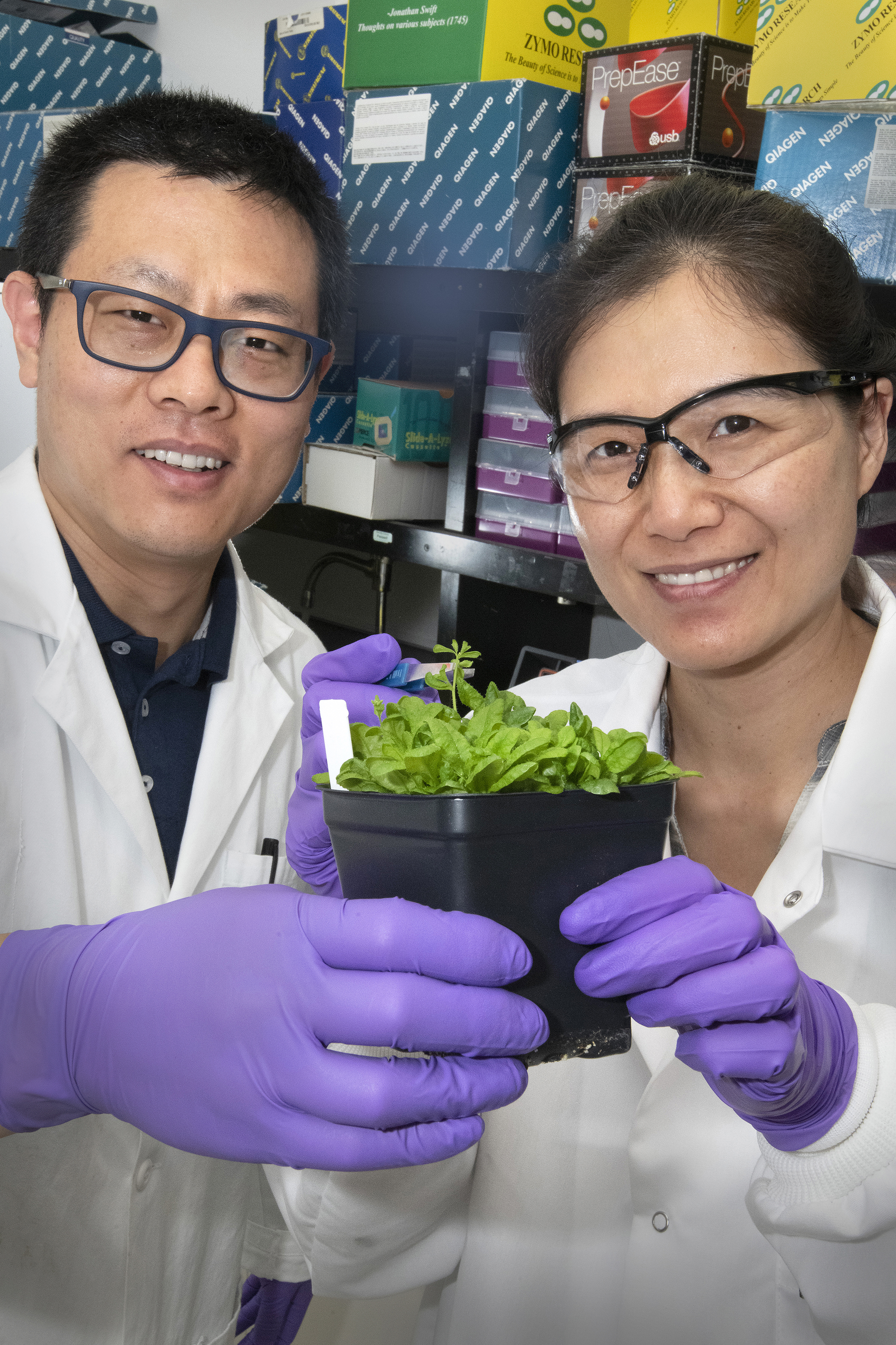 The study's lead authors, Zhiyang Zhai and Hui Liu, with an Arabidopsis plant