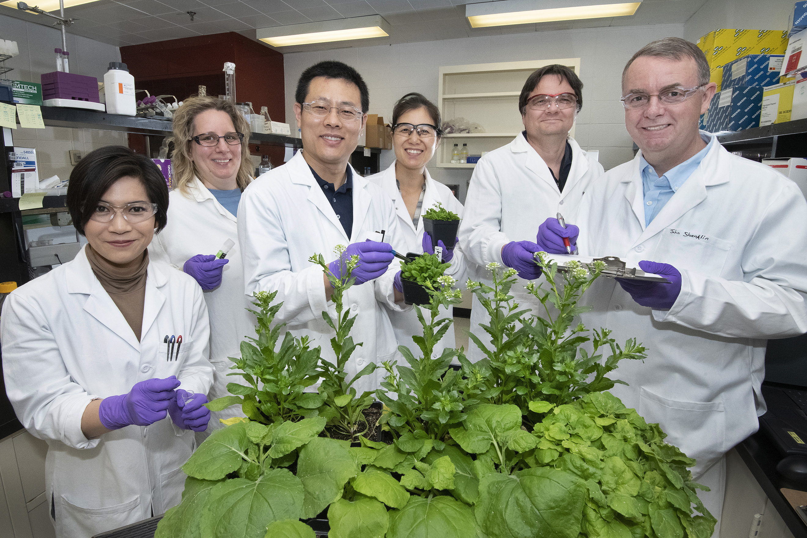 Brookhaven Lab plant scientists discovered why a protein that revs up oil synthesis also activates the brakes (l to r): Jantana Keereetaweep, Kate Kuczynski, Zhiyang Zhai, Hui Liu, Jorg Schwender, John Shanklin.