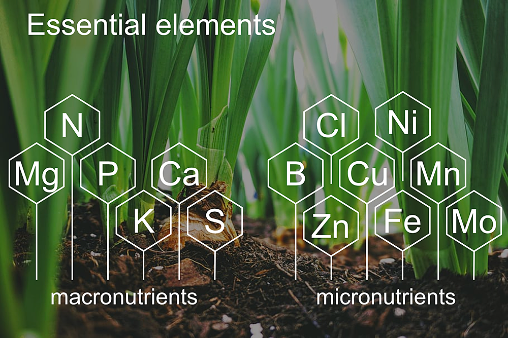 Bioenergy crops need a balanced diet of macro- and micro-nutrients. The Quantitative Plant Science Initiative's ultimate goal is the provide a genome-based understanding of the interdependence between nutrients, how plant nutrition affects metabolism, and how plants acquire these nutrients from the soil and distribute them to leaves.