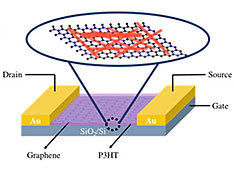 Cartoon of the graphene-P3HT nanowire hybrid field-effect transistor