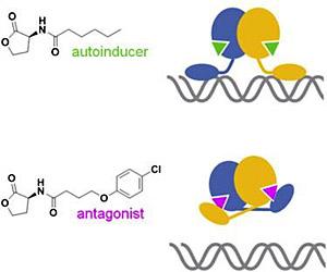 Quorum-sensing antagonists