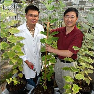 Kewei Zhang and C.J. Liu