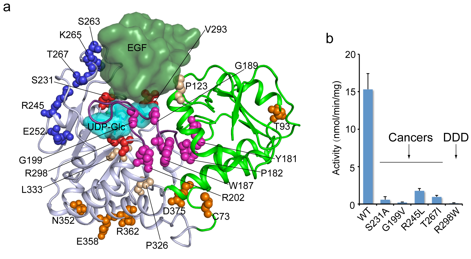 Scientists Determine Structure Of Enzyme Linked With Key