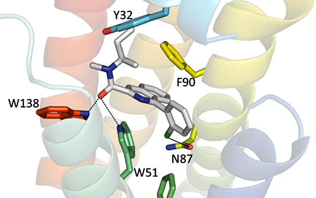 TSPO bound to a Valium-like compound
