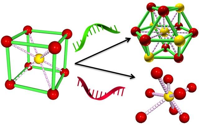 reprogramming DNA strands